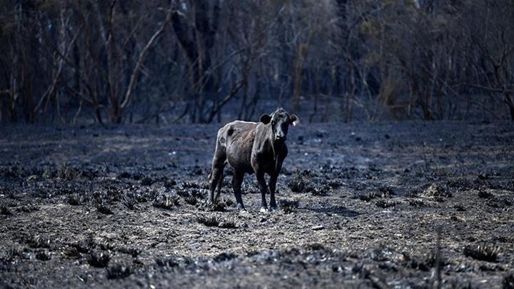 Avustralya yangınlarında salınan CO2, 116 ülkenin toplam yıllık emisyon değerinin üzerine çıktı