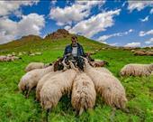 Murat Cacim, Çoban ve koyunları / Van