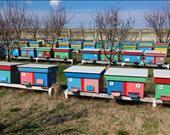 Mustafa Ulusoy, Renkli arılar / Isparta