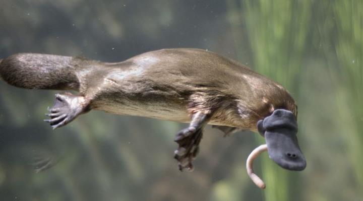Örneklerle canlılarda evrimin izini sürmek: Morfoloji, genetik ve ortak ata ilişkisi