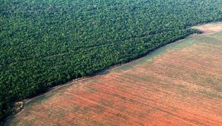 Amazon'un ormanlardan yoksun bırakılmış bölgeleri, depoladığından daha çok CO2 salıyor