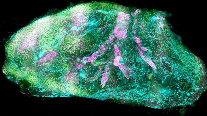 İnsan organları ilk defa hücresel düzeyde 3B haritalandı