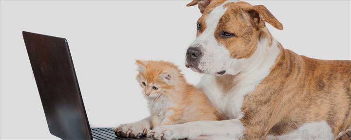 Evcil hayvan satışları internetten yapılacak