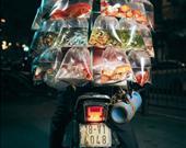 """Seyahat kategorisi. """"Bir balık tüccarı ürünlerini sergiliyor."""" Vietnam Hanoi'de bir satıcı akvaryum balıklarını sergiliyor."""