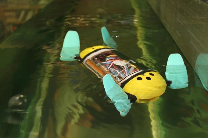 Akıllı robot su kaplumbağası akvaryumları gözetlemek için kullanıldı