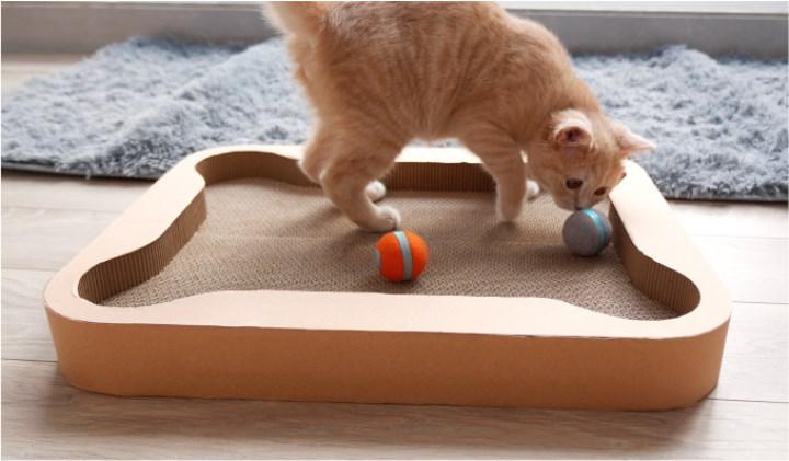 Cheerble kedilerinizin robot arkadaşı olacak