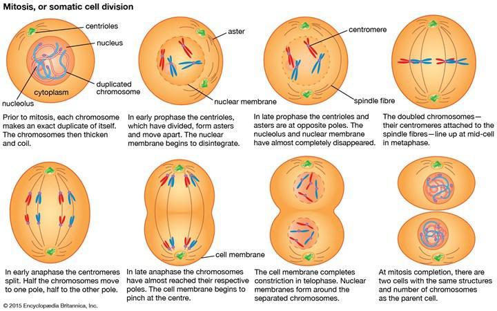 Kanser tedavisinde rol oynayabilecek potansiyel hedef protein keşfedildi