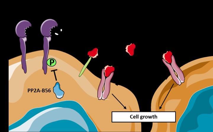 Kanser patogenezinde yer alan 2 protein keşfedildi
