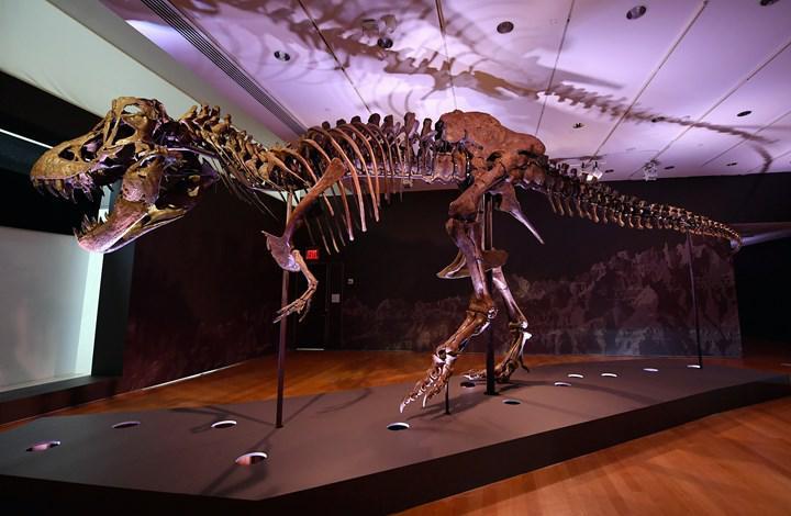 """Açık artırmayla satışa çıkarılan  """"Stan"""" lakaplı bir T.Rex fosili için tam 31.8 milyon dolar ödendi"""