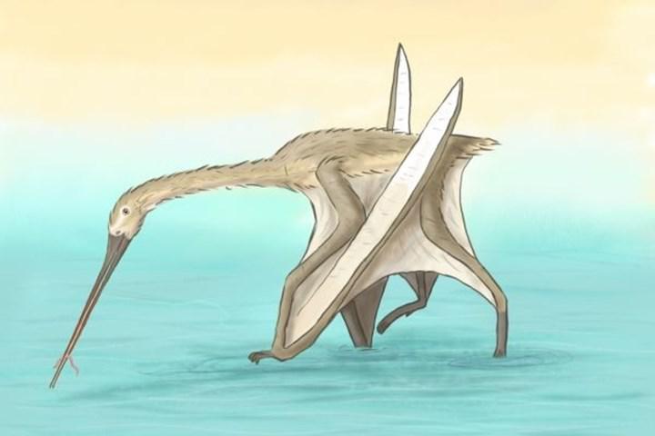 Pterozor takımına ait yeni tür keşfedildi