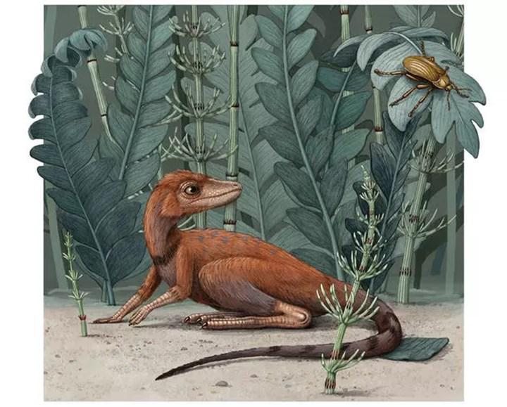 Dinozorlarların ortak akrabası Kongonaphon fosilleri incelendi