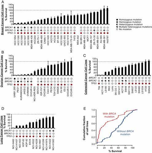 FEN 1 gen inhibisyonu kanser tedavilerinde kullanılabilir