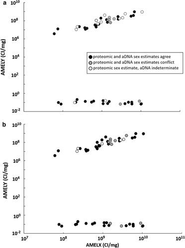 Diş minesinde bulunan amelogenin proteini cinsiyet tayininde kullanılabilir