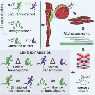 Uzun dönem egzersiz gen ekspresyonunu anlamlı ölçüde değiştirebilir
