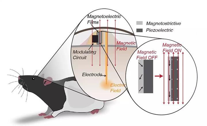 Manyetik alan ile çalışan beyin implantı geliştirildi