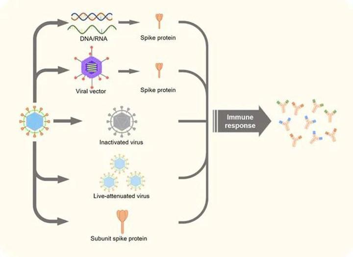Koronavirüs için geliştirilen tüm aşıların avantajları ve dezavantajları neler?