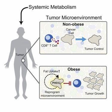Yağdan zengin diyet kanser riskini artırabilir
