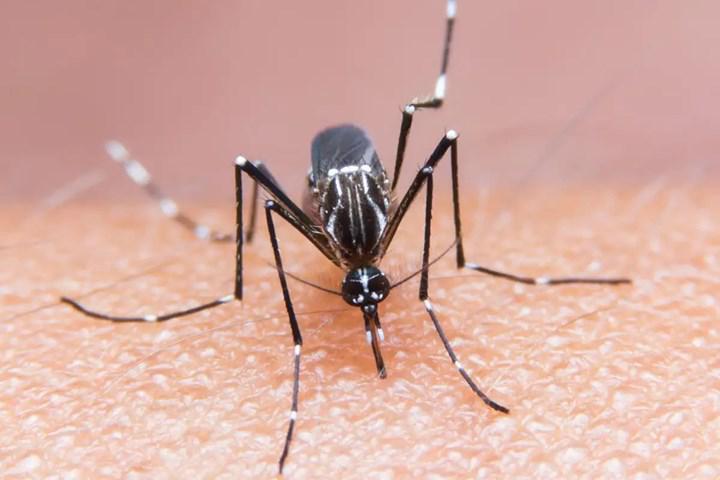 Genetiği değiştirilmiş mikroorganizmalar sivrisinek ilacı olarak kullanılabilir
