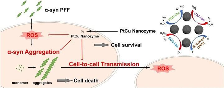 Parkinson'da hatalı katlanmış protein yayılımını azaltabilecek yapay enzim üretildi