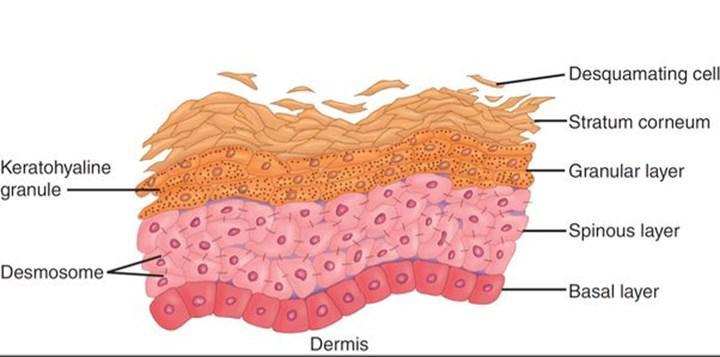 UV ışınların deri hücrelerindeki genomik etkileri incelendi