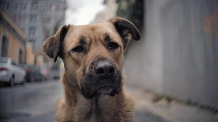 İstanbul'daki sokak köpeklerinin hayatını konu alan belgesel, dünya çapında haber oldu