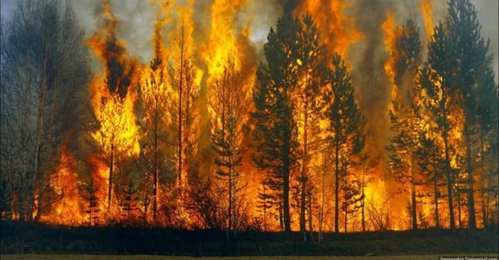 Ormanlar, 2050 yılına kadar oksijen kaynağı yerine karbondioksit kaynağına dönüşebilir