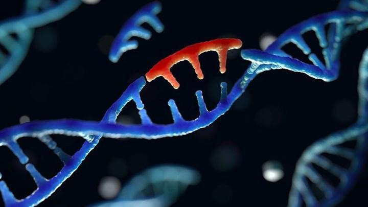 Koronavirüs Güney Afrika ve Brezilya varyantları Türkiye'de görüldü