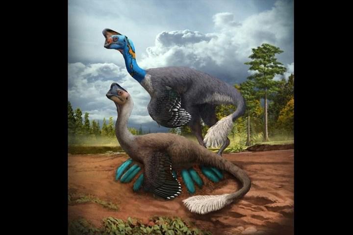 Kuluçkaya yatmış dinozor fosili keşfedildi