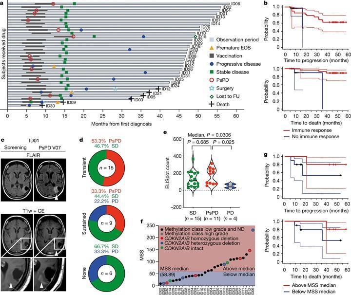 Beyin kanseri aşısı Faz 1 denemelerini başarıyla geçti