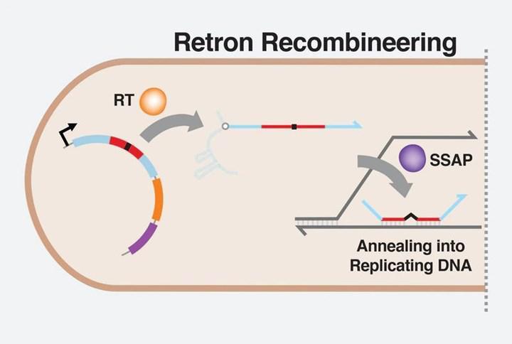 Harvard bilim adamları CRISPR'a rakip gen düzenleme aracı geliştirdi