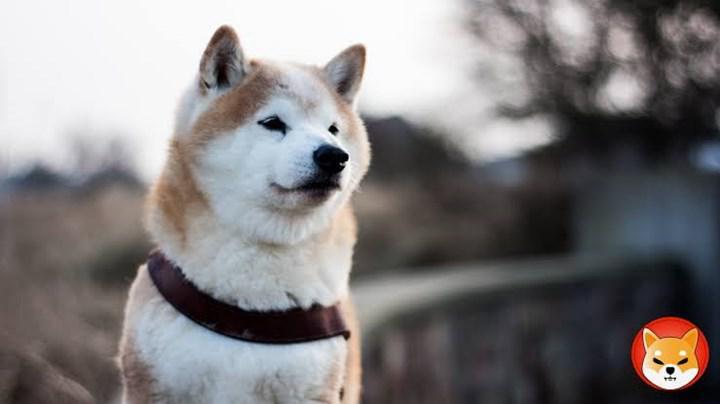 SHIB coin Binance'de listeleniyor, DOGE katili olur mu?