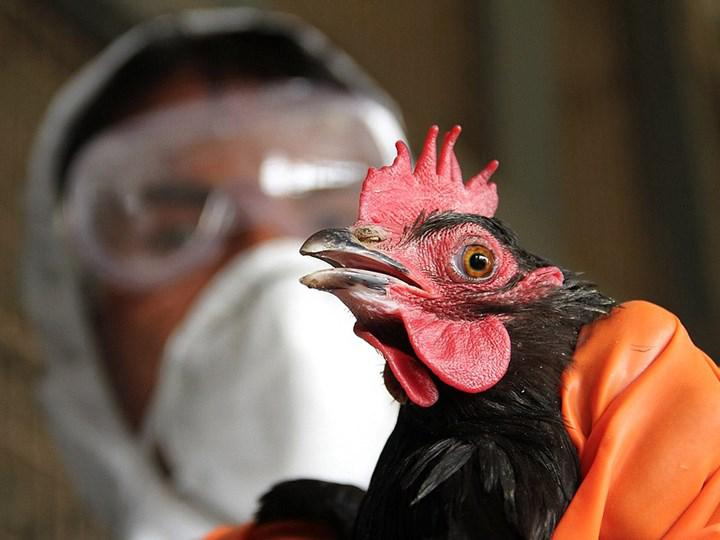 Çin'de ilk kez bir insanda H10N3 kuş gribi vakası görüldü