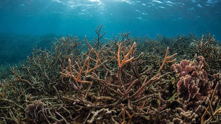 Araştırmacıların İddiasına Göre Okyanus Ekosistemindeki Çöküş, İnsanlığı 25 Yıl İçinde Mahvedecek