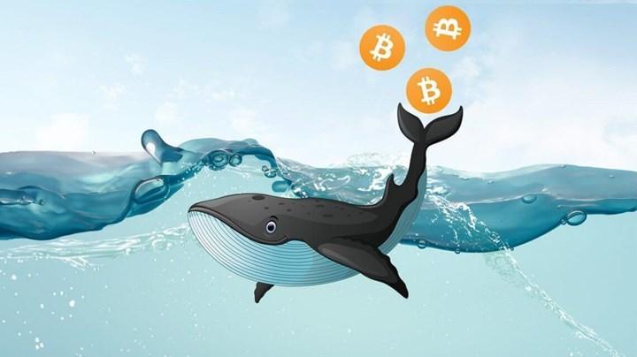 Bitcoin balinaları tekrar stok yapmaya başladı