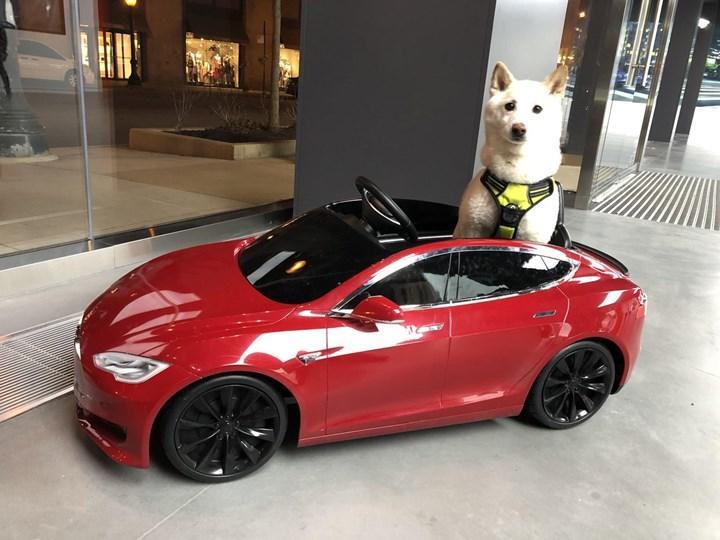 Elon Musk'ın Tesla araçlarında Dogecoin (DOGE) madenciliği fikri