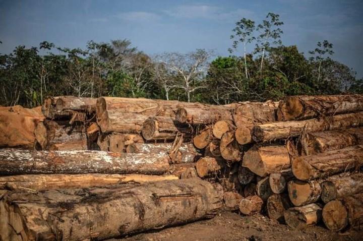 Uydu verileri, yağmur ormanlarını kurtarmaya yardımcı oluyor