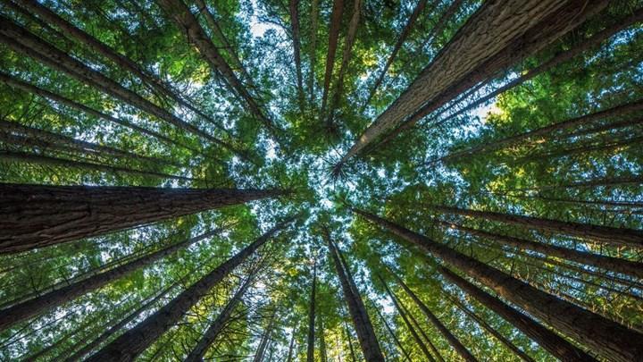 Galler iklim kriziyle mücadele için 86 milyon ağaç dikecek