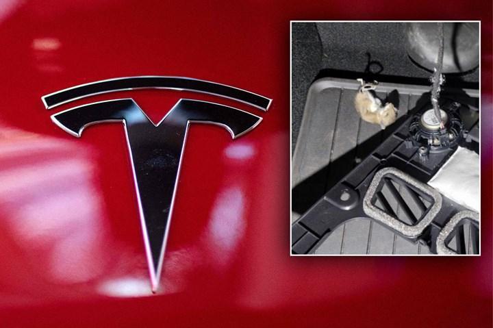 Tesla otomobilleri fareler kemiriyor