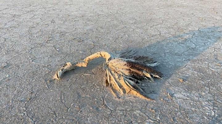 Tuz Gölü'ndeki flamingo ölüleri için Bakan açıklama yaptı