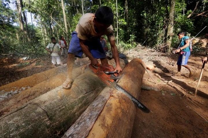 10.000'den fazla canlı nesli tükenme tehlikesi ile karşı karşıya
