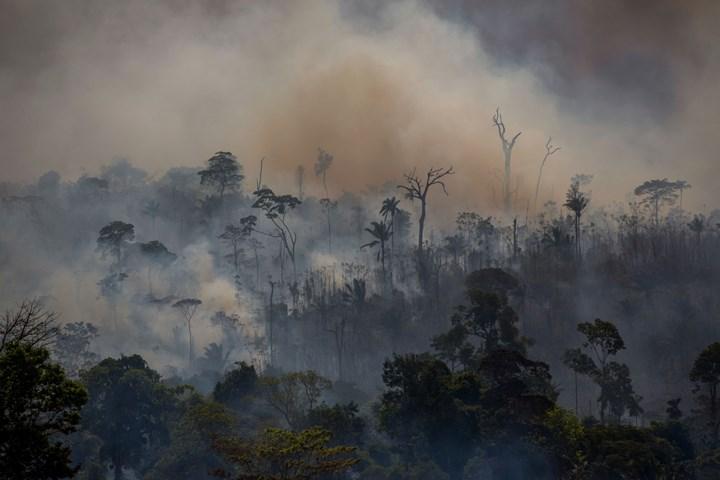 Amazon ormanları karbondioksit yuvalarına dönüşüyor