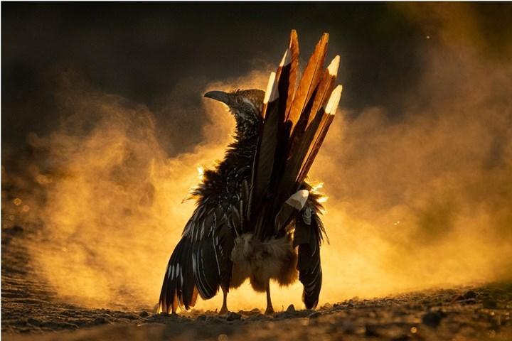 En güzel kuş fotoğrafları