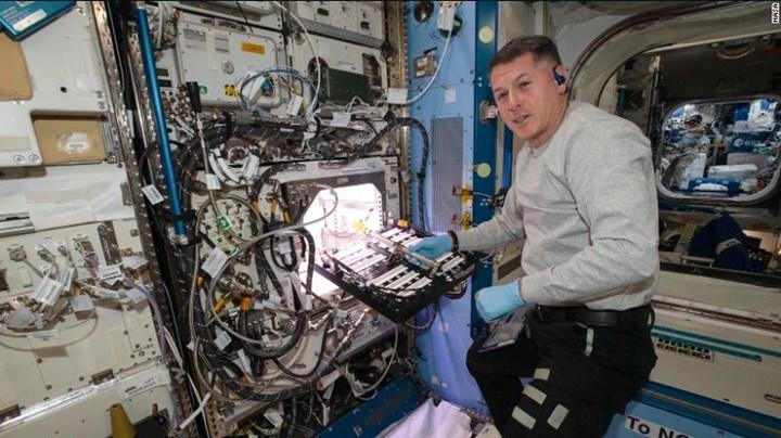 NASA uzayda yeni bir meyve yetiştiriyor, işte detaylar