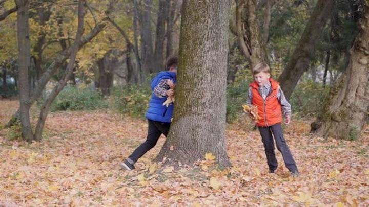 Ağaçlar çocukların beyin gelişimine yardımcı olabilir