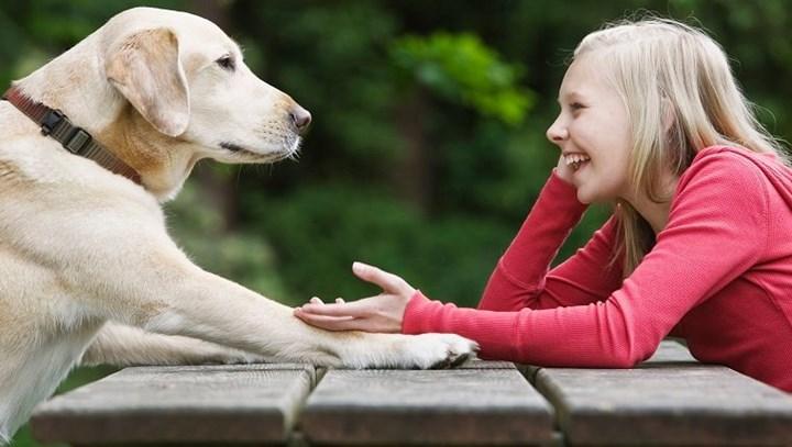 Araştırmaya göre köpekler yalan söylediğinizi anlayabilir