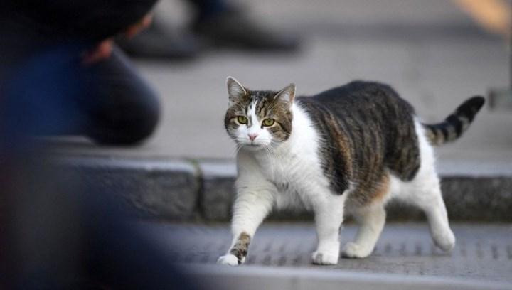 Kedilerin ruh halini algılayan uygulama geliştirildi