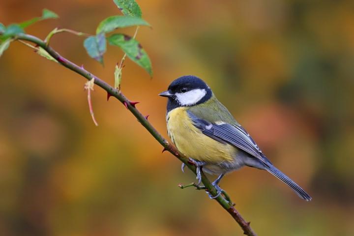 Kuşlar, hayvanların sırtındaki tüyleri çalıyor