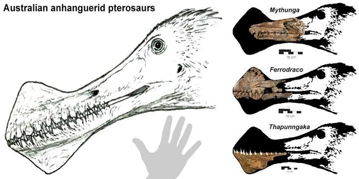 """Bilim insanları """"ejderha"""" benzeri bir dinozor fosili keşfetti"""
