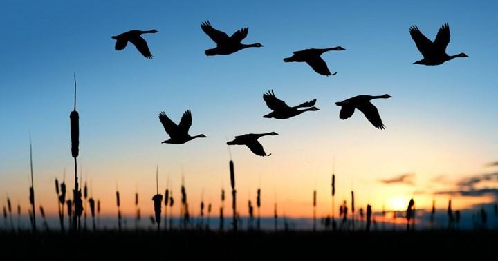 Son 50.000 yılda insanlar sebebiyle yüzlerce kuş türü yok oldu