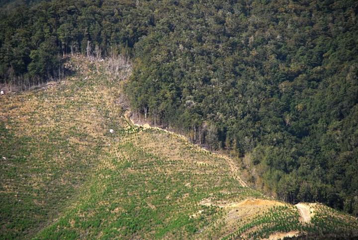 Ormansızlaşma, böceklerin kanatlarını kaybetmelerine sebep oluyor